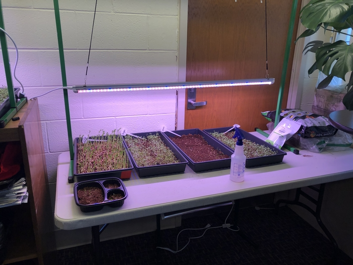 Indoor harvesting for Sunny Day! #microgreens #WEaretheKEY